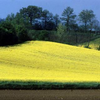 [:en] tuscany landscape[:it]paesaggio toscano[:]